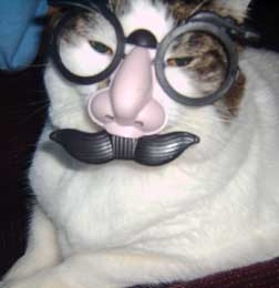cat in disguise
