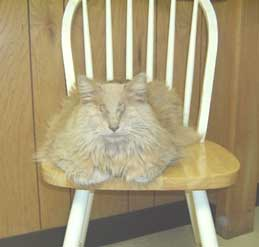 chester on chair