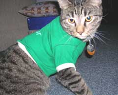 cat in shirt