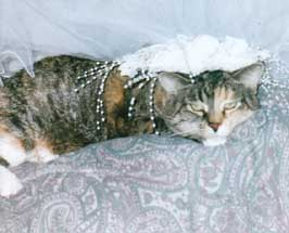 cat in wedding veil