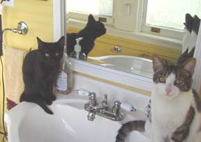kitties on sink