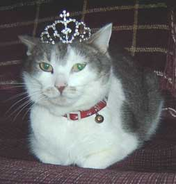 gray and white cat with tiara