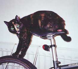 tortoiseshell cat on bike