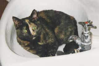 tortoiseshell cat in sink