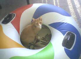 cat and inner tube